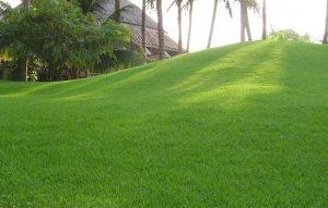 cỏ nhật