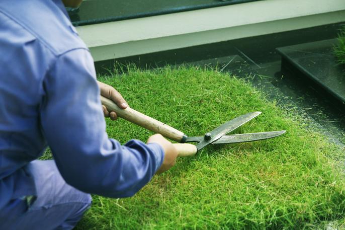 dịch vụ cắt cỏ tại bắc ninh