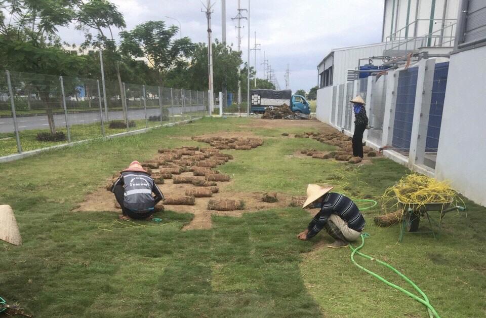 trồng cỏ nhật khu công nghiệp bắc giang